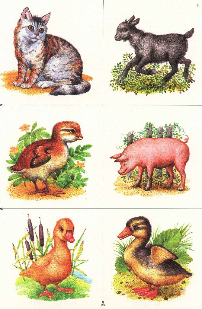 картинки животных и птиц для доу