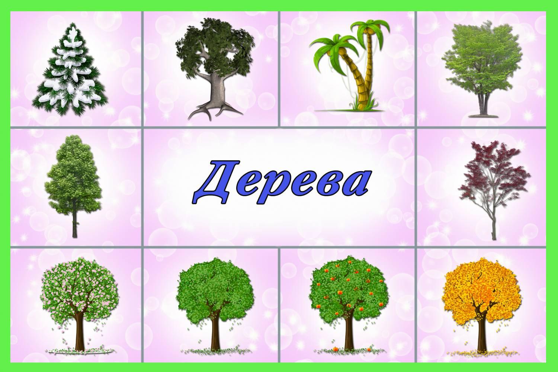 маликова картинки для презентации деревья и кустарники всегда